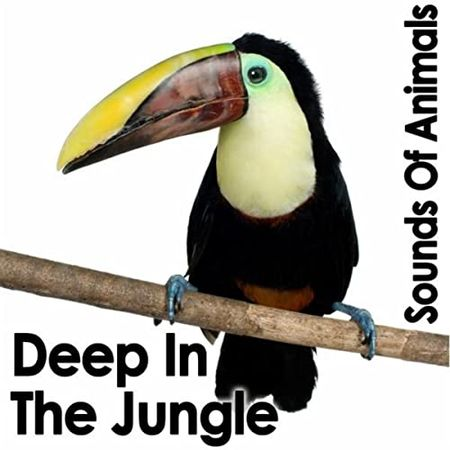 Sounds of Animals Deep in the Jungle FLAC
